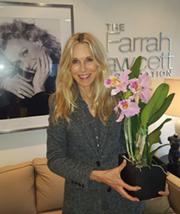 Farrah Fawcett Orchid